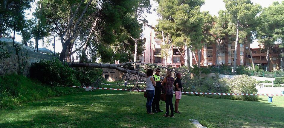 Desplomado un pino en la piscina de Altura