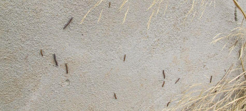 Una plaga de milpiés invade varias calles de Segorbe