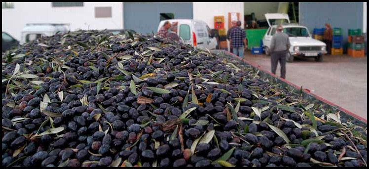 Italia distingue el aceite de Segorbe