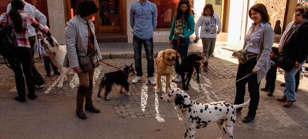 Mascotas felices y sanas