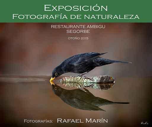 Rafa Marín expone en el Ambigú