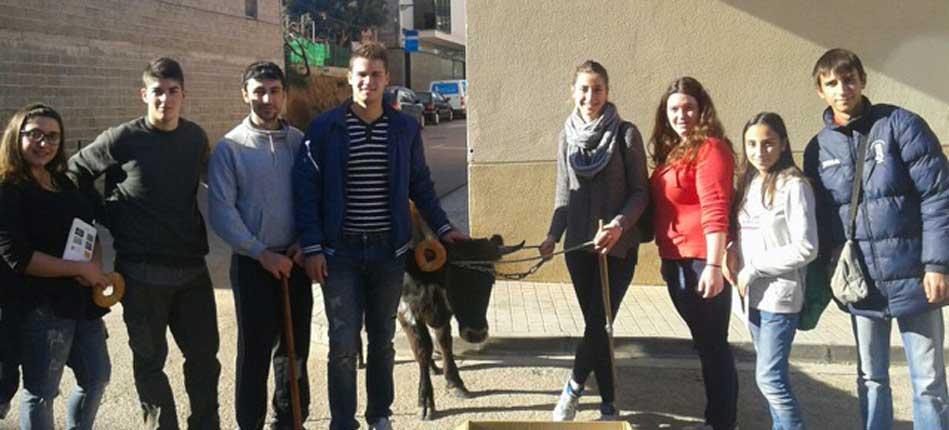 Toros y rollos para San Antón en Altura