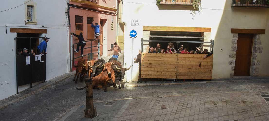 San Antón concluye sin cerdo en el sorteo