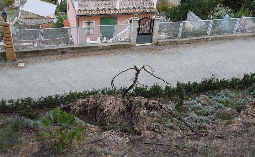 Cepellón sobre la ladera de Sopeña. Foto:J.Plasencia.