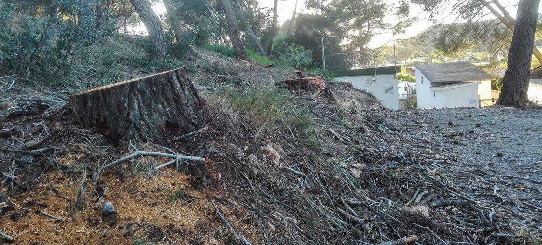 Nueva tala de pinos en La Esperanza