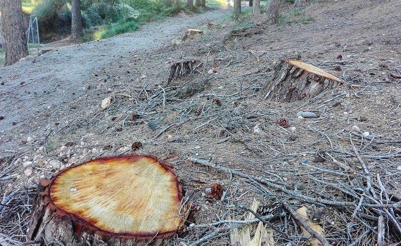 tala de pinos en La Esperanza