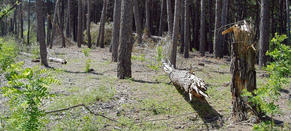 Segorbe coloca calderas de biomasa