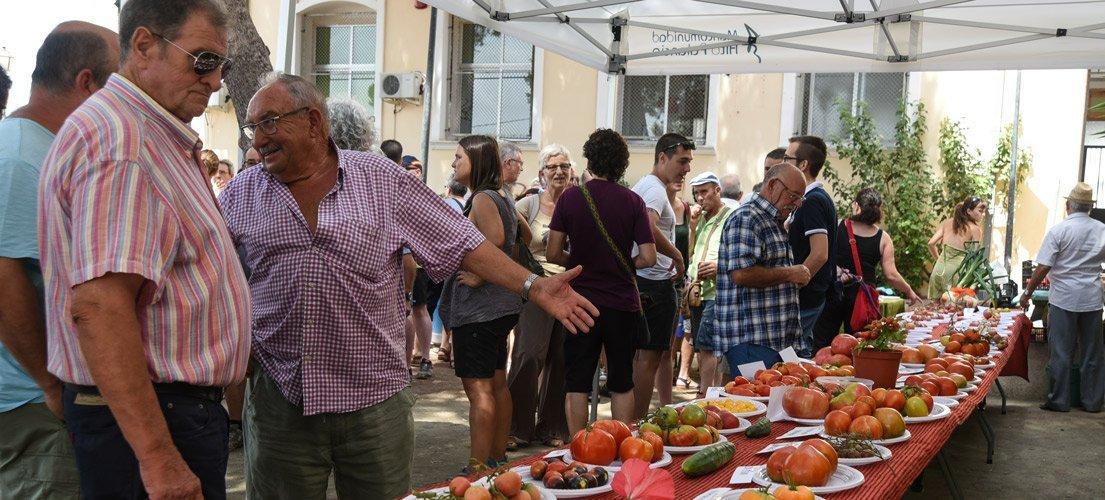Exitosa Cata del tomate en Sot de Ferrer