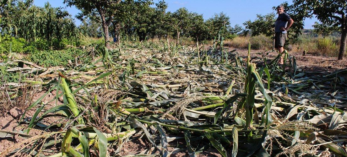 Jabalíes arrasan cultivos en Segorbe