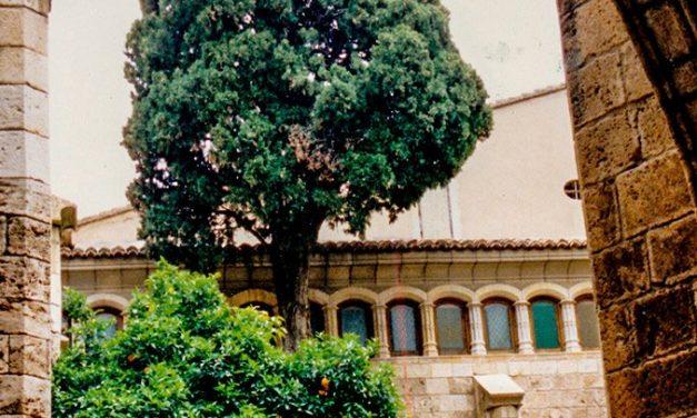 Cipreses y naranjos en el claustro en el s.XVIII
