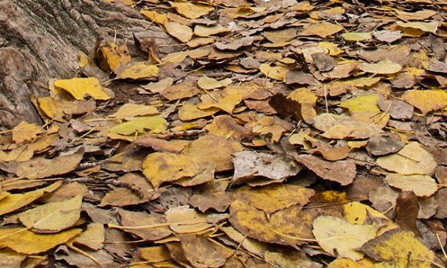 El otoño entra hoy en nuestras vidas