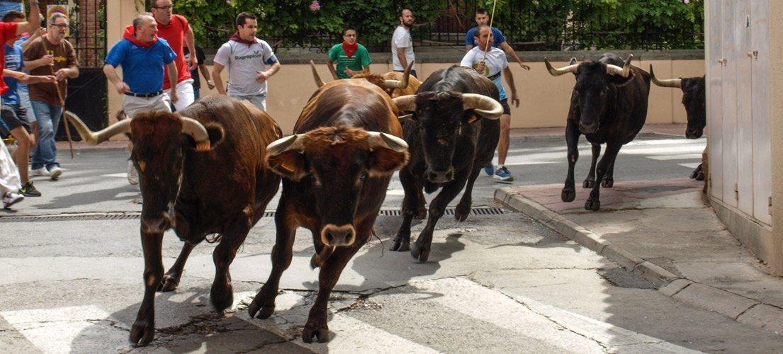 Paellas, disfraces y toros en las fiestas de Navajas