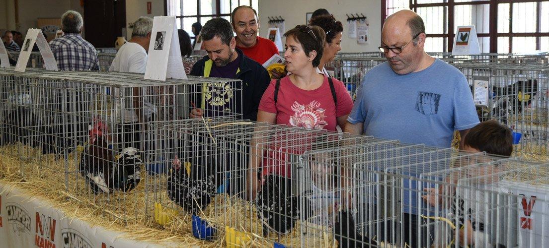 240 animales mostrados en la Feria Avícola de Sot