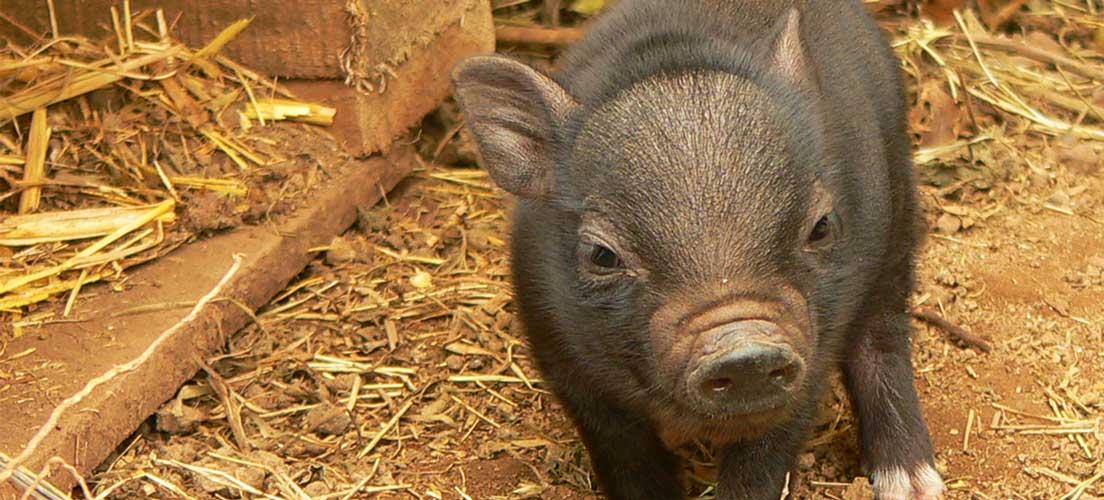 La policía de Segorbe rescata a 4 animales abandonados