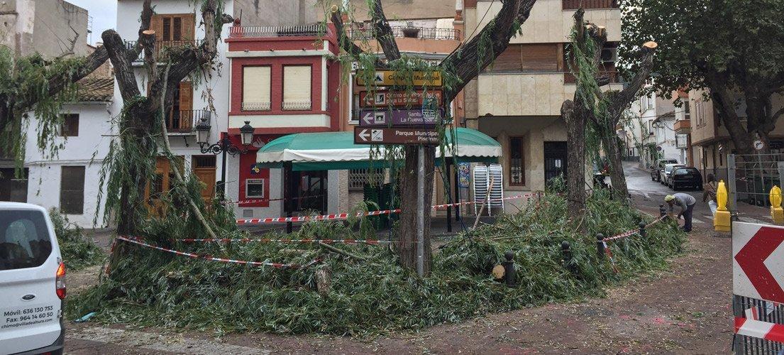 Sustituyen los árboles de la plaza el Árbol de Altura
