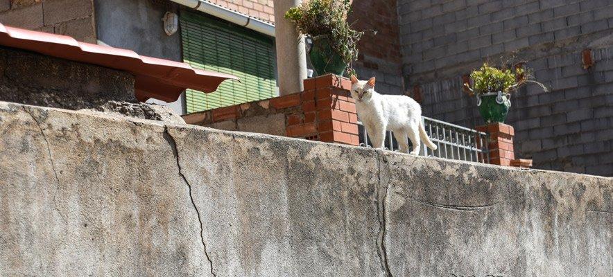 Segorbe expedirá el carnet de alimentador felino