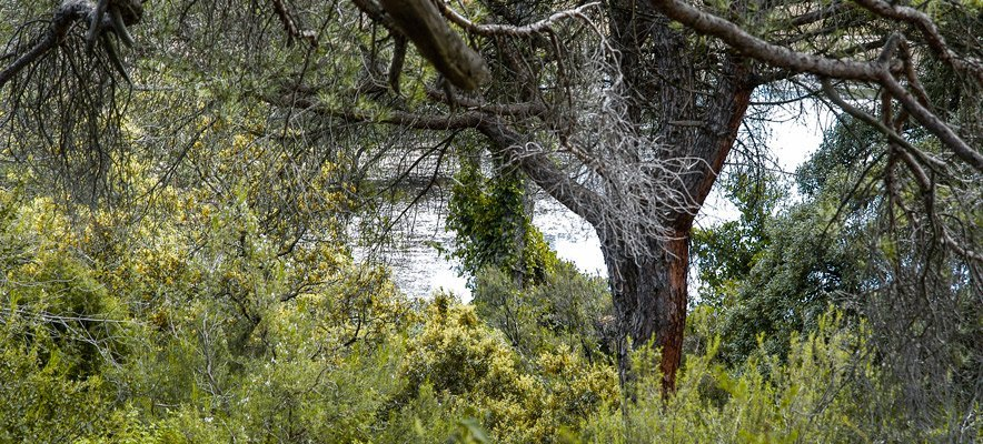 Los vecinos de Soneja reforestan La Dehesa