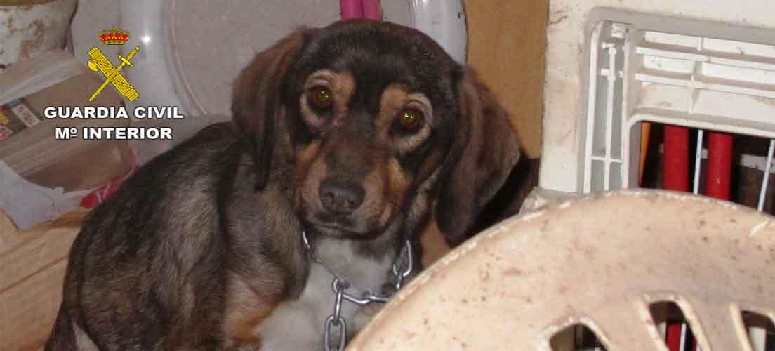 Seprona rescata a un perro caquéctico en Castellnovo