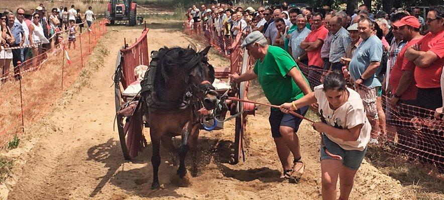 Concurso de Tiro y arrastre en la Feria de Barracas