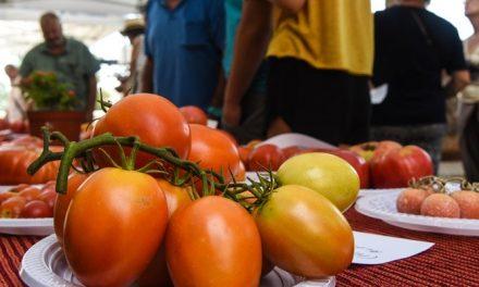 El mejor tomate tradicional estará el domingo en Navajas