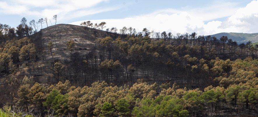 Los daños del incendio se dejan notar en los cultivos agrícolas