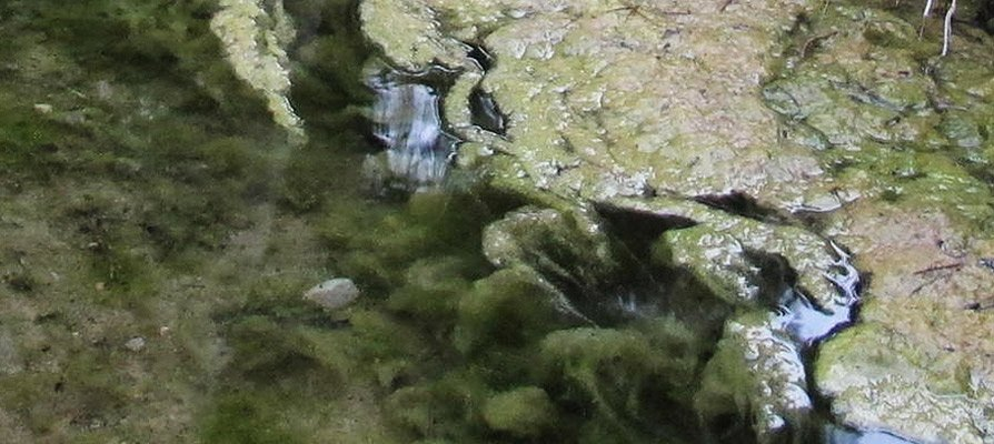 Localizan 2 focos de mosquito tigre en Segorbe