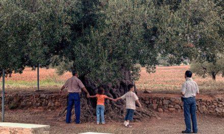 8 poblaciones del Palancia protegerán sus árboles monumentales