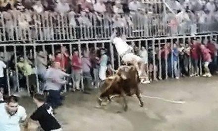 Un hombre es corneado por un toro en Viver