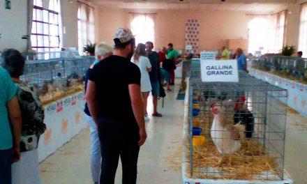 Sot de Ferrer celebra la II Feria Avícola