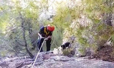Bomberos rescatan a un perro y sofocan un incendio