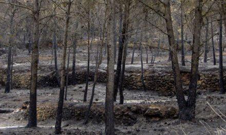 Gátova acoge una jornada de reforestación del incendio de la Calderona