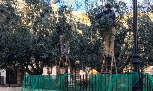 La venta de aceite de los jardines será destinada a Servicios Generales