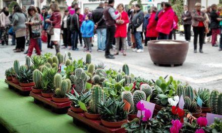 Cactus y cyclámenes en recuerdo de las víctimas de la violencia de género