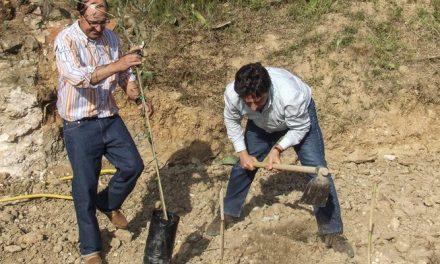 La Cooperativa de Viver subvenciona la plantación de Serrana Espadán