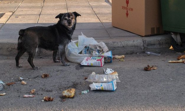 Se reduce el número de animales abandonados en Segorbe