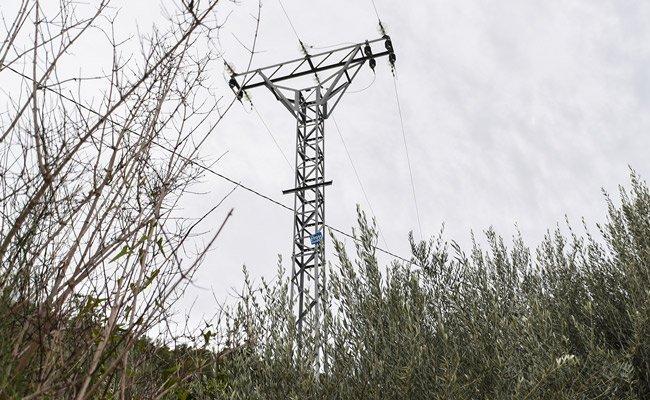 Iberdrola tala un latonero centenario en el camino La Tebaida de Segorbe