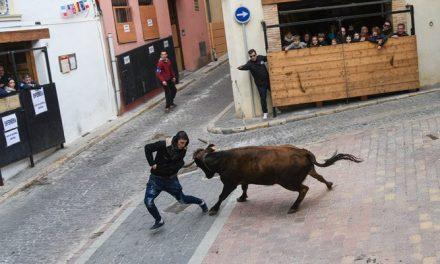 Los toros de San Antón discurren con normalidad en Segorbe