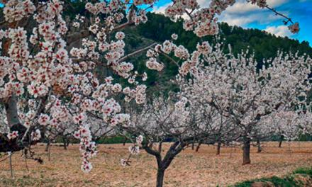 Segorbe celebra la VI Fira de la Biodiversitat del País Valencià