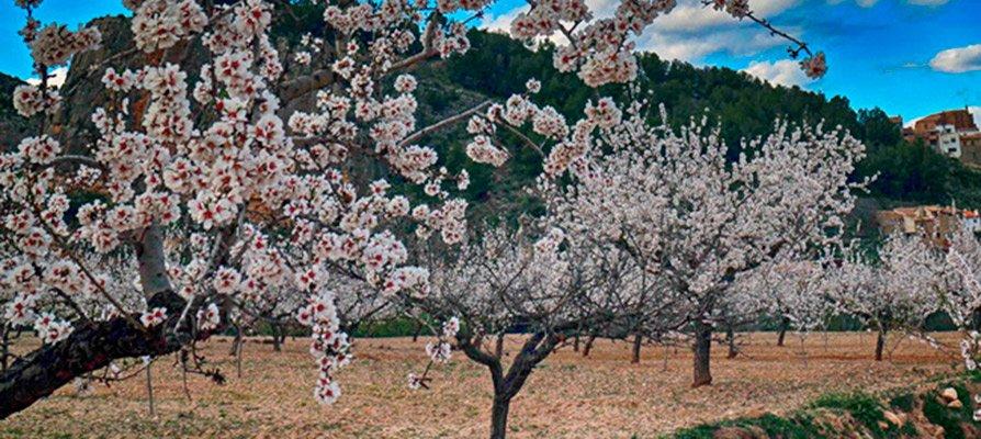 La primavera trae consigo frío y viento para toda la semana