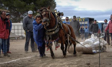 Una veintena de caballos en el Concurso de Tiro  de Altura