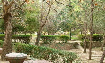 © Altura crea un Catálogo de Árboles Monumentales con diez ejemplares