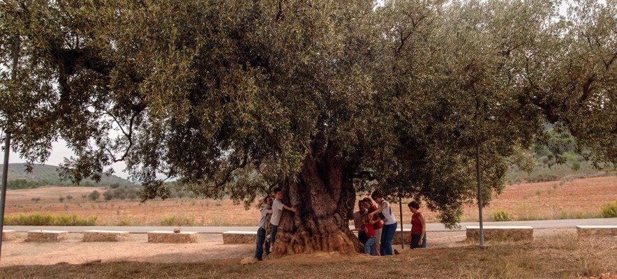 Ocho municipios pueden recibir  ayuda para árboles monumentales