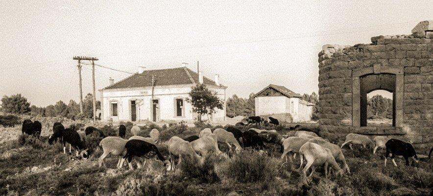 Mil cabezas de ganado se darán cita en la trashumancia de Altura