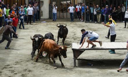 El éxito de público acompaña los toros de la plaza del Almudín