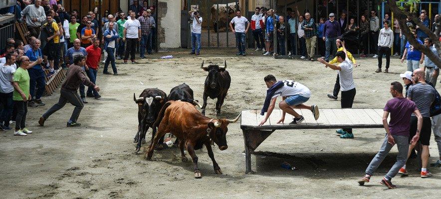 La peña Mucho Arte hará toros en mayo en la plaza del Almudín