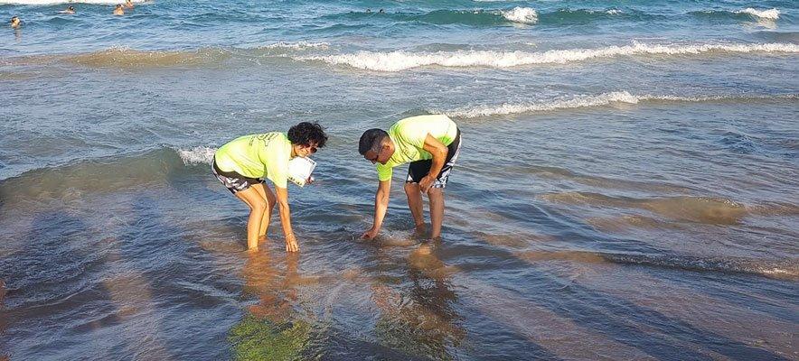 Una pareja de vespineros inicia la Ruta de los Cuatro Mares