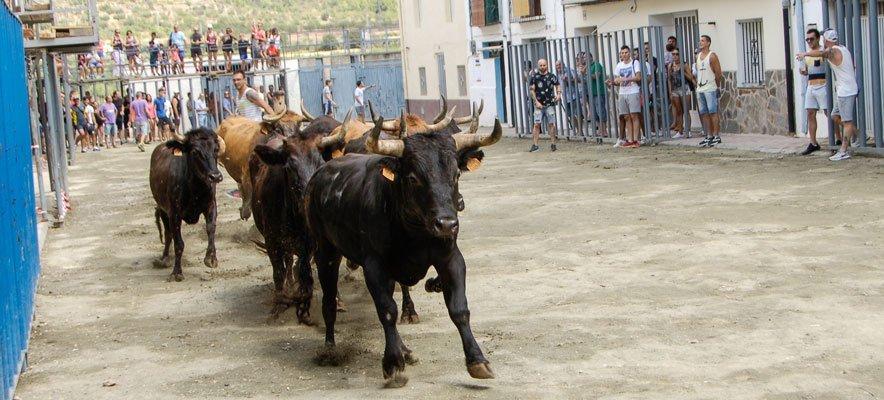 Discrepancias políticas hacen peligrar los toros y programa de Cárrica