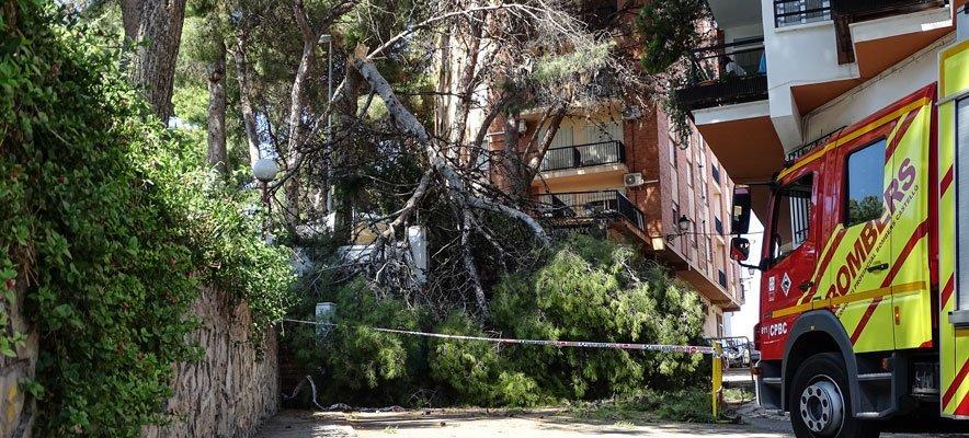 La rotura de un nuevo pino causa importantes destrozos en Altura
