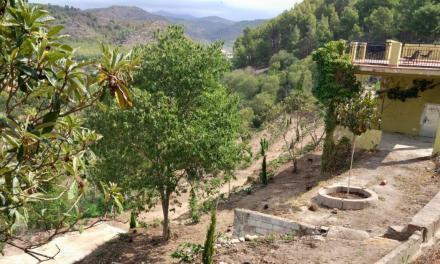 Viveros Mas de Valero ajardina la zona del Argén