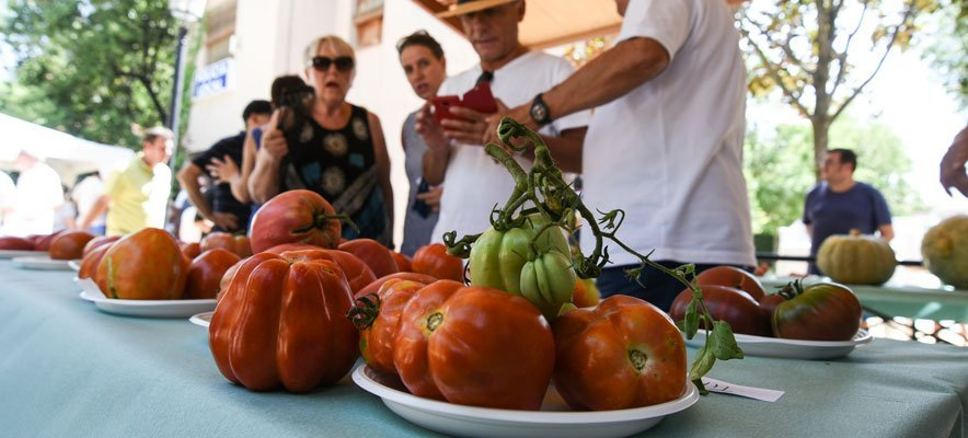 Geldo celebra la V Cata del Tomate